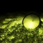 Fruits luminescents et boule de foudre (Odelin CHARRON)